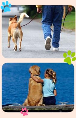 Educazione cane gatto cinofila for Educazione cane