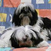 Allevamento cane razze cuccioli for O sole mio mesa y lopez